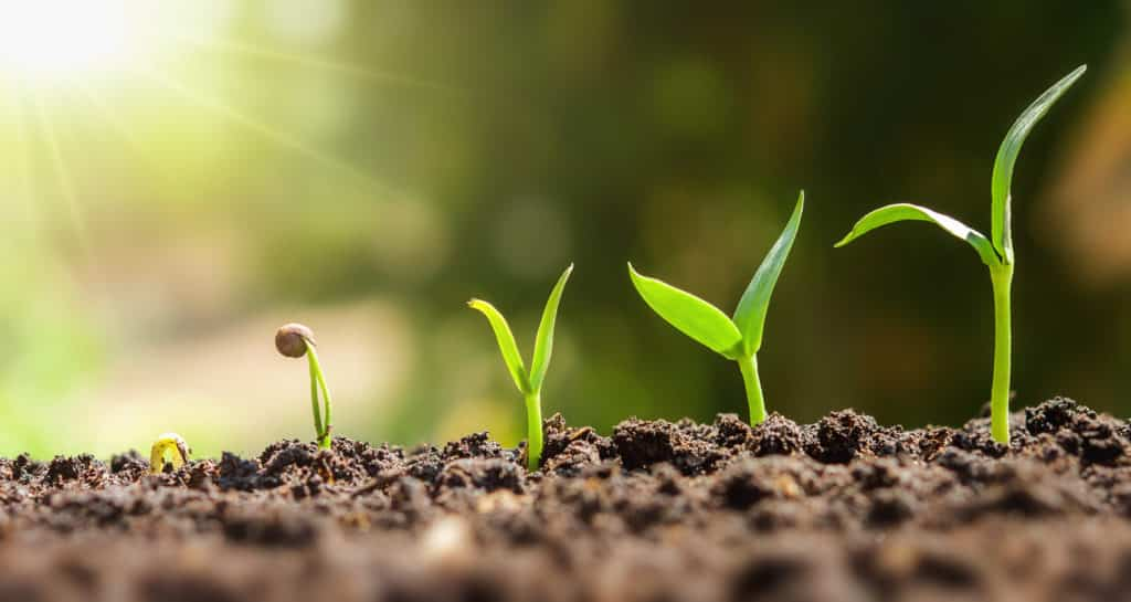 plant seeding growing step. concept agriculture